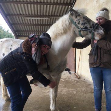 Ostéopathie animalière !