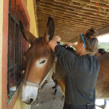 TP toilettage de mules et mulets !