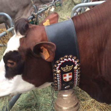 Sommet de l'élevage 2017 !