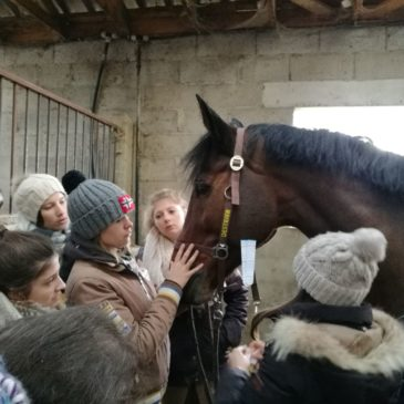 Mise à l'effort du cheval…
